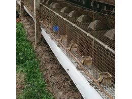 威海貉养殖产业排泄物处理